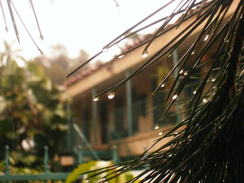 Raindrop Needles