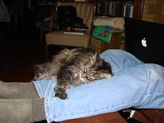 Oscar in his favorite spot.