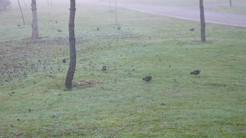 Pollas en el camino