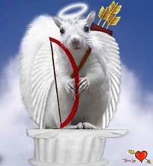 Cupid's arrows for sale on EBAY (Terry_Lea) Tags: squirrel squirrels bow valentines arrow cupid abigfave treeratromance howrthings