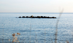 RockIsland (iwishmynamewasmarsha) Tags: sweden ystad