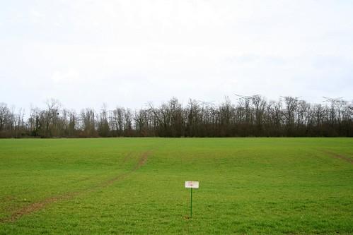 053 - Forêt régionale de Saint-Vrain