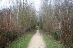064 - Foret regionale de Saint-Vrain
