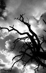 Dead tree soul reaching sky (Cracas) Tags: tree portugal silhouette deadtree alentejo corkforest eos400d cracas impressedbeauty