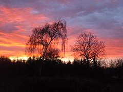 Sunrise at Kamieskiego st. , Wrocaw 2007 (szogun000) Tags: sunset sky tree colors sunshine clouds sunrise dawn cityscape fuji dusk poland polska finepix fujifilm picturesque wroclaw wrocaw s3500 lowersilesia dolnolskie dolnylsk