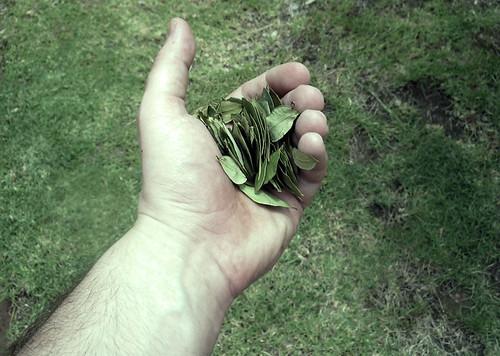 Cada gramo de coca consumido en Europa borra cuatro metros de selva tropical