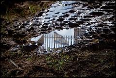 Israel (Shemer) Tags: reflection grass puddle israel bars mud flag