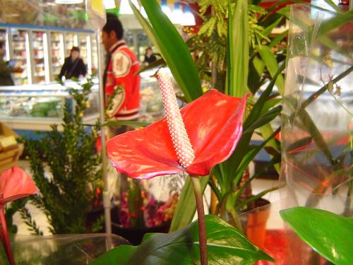 मिसिरजी का फूल
