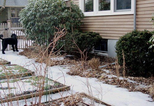 bushes by house