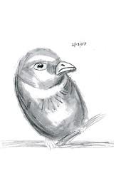 bird draw real animals