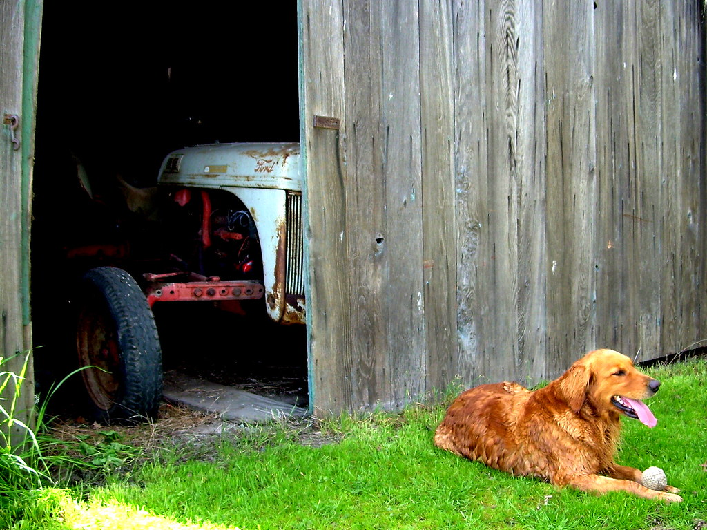 portrait of dog with tractor