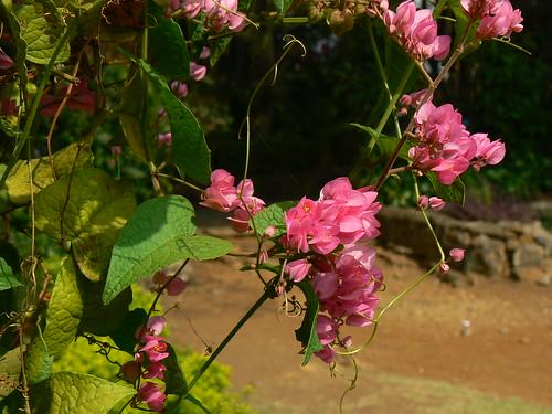 rosas de amor. rosas de amor roses of love. Cadena de Amor; Cadena de Amor. wongulous