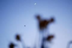 (John*) Tags: sunset moon daffodil birdy