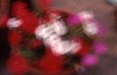 Blurred Flowers (MatthewJCole) Tags: flowers slidefilm multipleexposures contaxg2