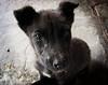 A heartbeat at my feet (Aditya Rao.) Tags: dog india black cold macro puppy death lomo eyes floor halo gandhi hungry pup vignette bits rajasthan weak shiver pilani