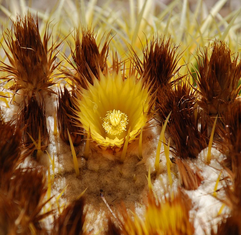 Cactus Spring Flower