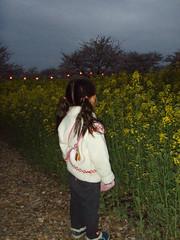 菜の花-2007-
