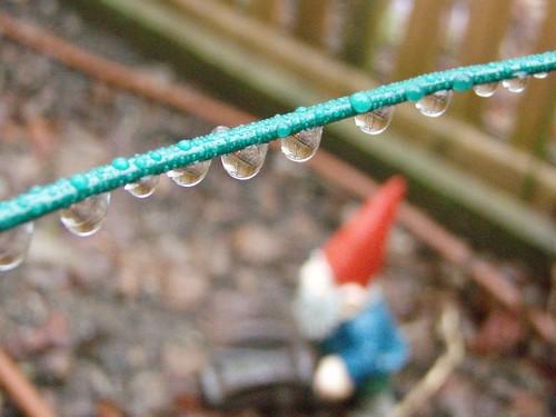 gnome in the rain