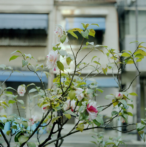 古い建物と花