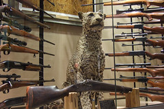 Hunting Taxidermy