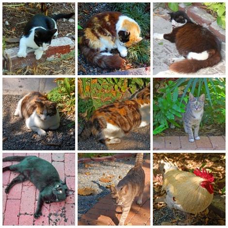 Hemingway house critters