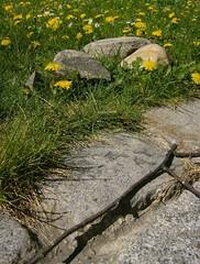 Path, stones, meadow (monika & manfred) Tags: vienna light grass austria stones details meadows dandelion urbannature mm lunchtimewalk springishere ironphotographer justsoimages utata:project=ip20 meadowimpressions utatadriven