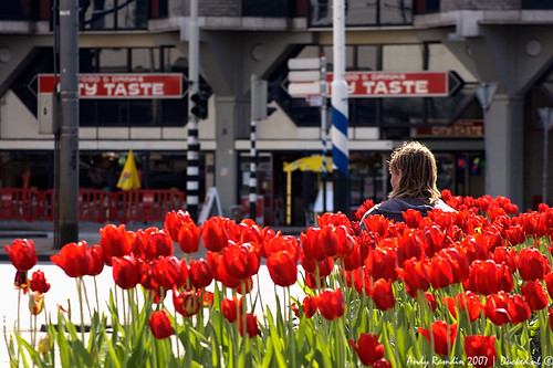 Red Tulip Man