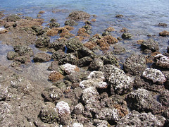 coralbeach2.jpg