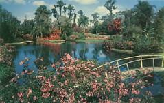 Cypress Gardens Postcard (Cowtools) Tags: florida postcard ephemera vintagepostcard cypressgardens