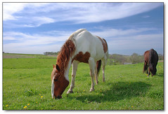 Horsies (Bubba Trout) Tags: horse green ariel nature grass clouds farm iowa pasture hotstuff equine naturesfinest allrightsreserved pfo 161907