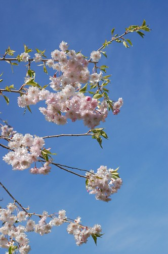 another flowering tree