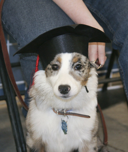 Cobalt Graduating
