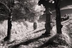 Little Tuscany 2 (Jens J. Hoffmann) Tags: bw blackwhitephotos nikon d90 infrarot infrared landscape mood nature sw tree einfarbig outdoor landschaft wald pflanze baum