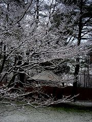 snow and gazebo