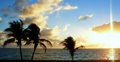 Sunrise in Miami, Florida (lilith121) Tags: ocean sky usa sun beach nature water sunrise j florida miami palmtrees l lilith121 travelerphotos