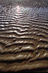 Sun after flood (crosslens) Tags: sun reflection texture beach water puddle sand waves pattern flood explore elbe highflood abigfave