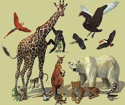 Molts animals