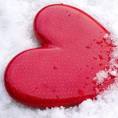 Love is a bird........... (cattycamehome) Tags: red white snow hot cold colour macro love ice tag3 hearts rouge frozen lyrics pain cool bravo tag2 all tag1 searchthebest heart bright song madonna  rights freeze icy reserved catherineingram openhearted magicdonkey instantfave artlibre january2007 cattycamehome 200750plusfaves allrightsreserved cfoct