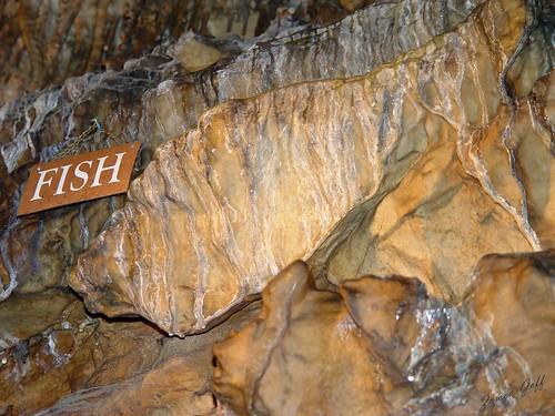 """Rock"" Fish :))"