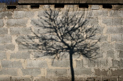 Play with the winter light (sonofsteppe) Tags: street light shadow urban sunlight tree art stone wall facade concrete grey hungary branch finding bare budapest gray cement explore shade material blocks thewall bough ilmuro patched wallscape sonofsteppe pusztafia haphazartshapesshadows haphazarturbannature urbanlifeoftrees