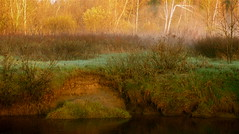 Marshland in light! Marais en lumire! (Denis Collette...!!!) Tags: light sun canada soleil spring bravo lumire qubec marais printemps marshland naturesfinest firstquality abigfave deniscollette world100f