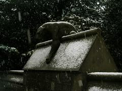 Snow Cat - by Le Kizz