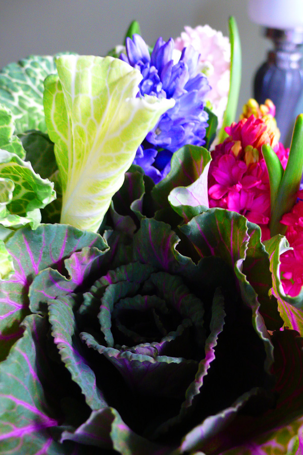 cabbages and hyacinths 2