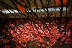 fallen (varf) Tags: rose petals twigs wilsonsmarriageproposalpreparations