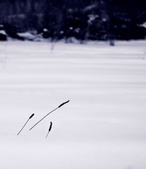 weeds (-liyen-) Tags: winter snow d50 nikond50 minimalist challengeyouwinner 3waychallenge
