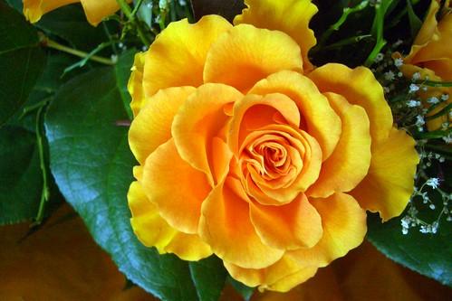 unbekannte Rose (02)
