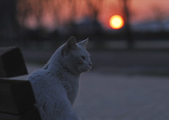Nikon D200 (Masakazu Ikeguchi) Tags: sunset animal japan cat nikon neko d200 fukuoka straycat bestofcats cat500 diamondclassphotographer flickrdiamond