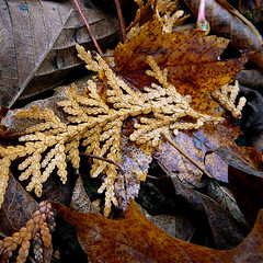 Autumn spirit! / Esprit dautomne! (Denis Collette...!!!) Tags: old autumn canada automne searchthebest time spirit quality age qubec temps vieux esprit aclass vieillesse naturesfinest annes blueribbonwinner feuillesmortes g abigfave anawesomeshot colorphotoaward ultimateshot deniscollette flickrdiamond world100f