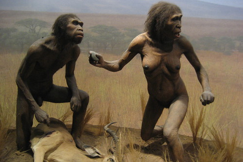 NYC - AMNH: Spitzer Hall of Human Origins - Homo Ergaster | Flickr ...