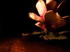 candle (aaulwes) Tags: pink flowers light shadow digital candles shadows darkness lotus kodak warmth indoors aura tabletop